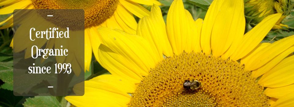 sunflowerslider2